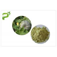 Vegan Protein 50% 60% Natural Dietary Supplements Ecocert Certified Organic Pumpkin Seed Protein Powder Manufactures