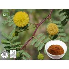 Acacia Catechu Extract Manufactures