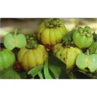 Garcinia Cambogia Extract powder Manufactures