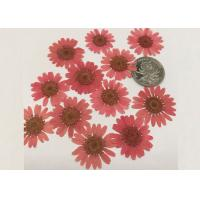 Mirror Decoration Dried Pressed Flowers Material For DIY Handicrafts Manufactures