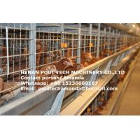 Chicken  Farming Equipment Hot Galvanized Cage H Type Automatic Layer Cage & Chicken Coopwith 112 Birds for Uganda Manufactures
