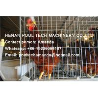 Hot Galvanized Steel Cage Battery Layer Breeder Chicken Cage Coop & Hen Cage & Cock Cage for Chicken Farming Manufactures