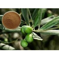 CAS 32619-42-4 Cosmetic Raw Materials Olive Leaf Extract Powder For Digestive System Manufactures
