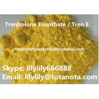 Yellow Natural Anabolic Steroid Trenbolone Enanthate / Tren E Bodybuilding powder Manufactures