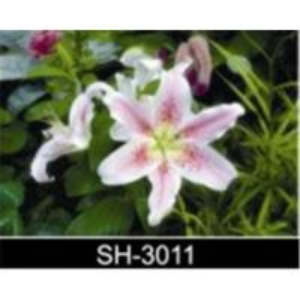 Supply 3D lenticular picture,decorative picture, 3D images, 3D images Manufactures
