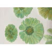 Mint Green Dyed Dried Pressed Flowers Handmade For Press Art Painting Material Manufactures