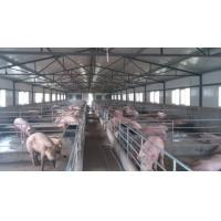 Quality H Section Steel Poultry Farm Structure With Galvanized C Purlins for sale