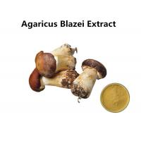 Agaricus Blazei Extract Promoting Hematopoiesis , Ji / Pine Medicinal Mushroom Powder Manufactures