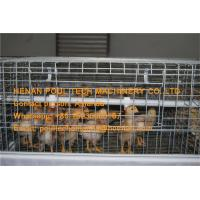Poultry Farm  Hot Galvanized Cage  Automatic Small Chicken Cage Coop for Brooding Room with Feeding & Drinking System Manufactures