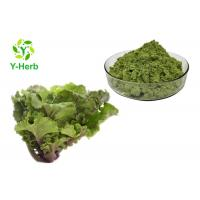 China Collard Leaf Vegetable Extract Powder Purple Green Curly Kale Juice Concentrate Powder on sale
