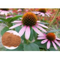 Whole Herb Antibacterial Plant Extracts Echinacea Purpurea Powder Soluble In Water Manufactures