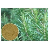 Ursolic Acid Rosemary Herbal Plant Extract Anti Oxidation For Cosmetic CAS 77 52 1 Manufactures
