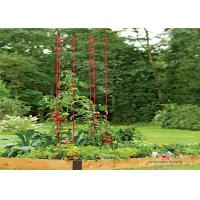 Durable Garden Metal Tomato Cages Manufactures