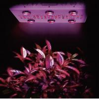 1000W hydroponic growing system Noah 6S high power cob led light for indoor greenhouse Manufactures