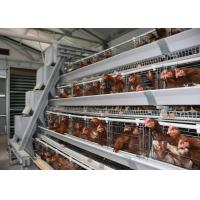 Chicken Cage Hot High Quality Automatic Poultry Bird Equipment for Layer Chicken Manufactures
