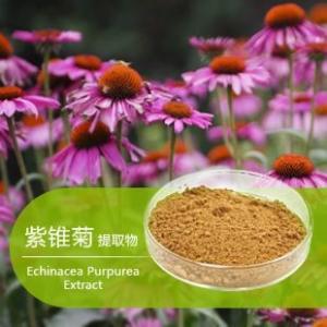 China Free Sample echinacea extract/ echinacea purpurea root extract/echinacea purpurea powder on sale