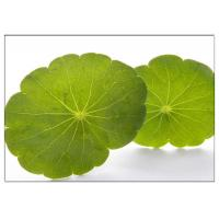 Skin Scars Anti-aging Gotu Kola Leaf, Centella Asiatica Extract for Cosmetic industry Manufactures