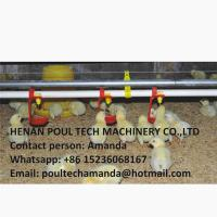 Quality Poultry Farming Steel Automatic Broiler Chicken Floor Raising System & Deep Litter System with Nipple Drinker System for sale