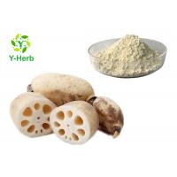 China Meal Replacement Powder Food Grade Extract Pure Natural Lotus Root Powder on sale