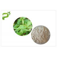 CAS 989 51 5 Egcg Green Tea Leaf Extract , Green Tea Supplements For Weight Loss Manufactures