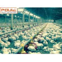 Quality Poultry Farming Silver Steel Automatic Broiler Chicken Deep Litter System for sale