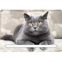 Custom 7x11cm Lovely Cats 3d Fridge Magnets With Notepad For House Refrigerator Manufactures