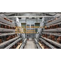 New Steel Sheet Silver White Chicken Farm Automatic Egg Hen Chicken Cage Equipment with 90-200 Chickens Manufactures