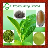 China Herbal Extract green tea extract tea polyphenol 50%-98% HPLC on sale