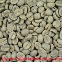 Green Coffee Bean Extract herbal extract  powder Manufactures