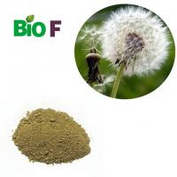 China Dandelion Extract Powder , Dandelion Root Supplement For 10% Flavone on sale
