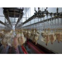 poultry slaughter equipment Manufactures