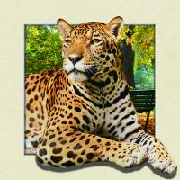 Buy cheap Custom Lenticular Image Printing For Gift , 5d Animal Collage Poster 15.7x15.7 Inches from wholesalers