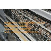 Hot Galvanized Cage in Poultry Farm A Type Automatic Day Old Chicken Cage Equipment with 162 Birds in Chicken Shed Manufactures
