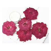 True Rose Flower Dried Pressed Flowers For Pendant Necklace Jewelry Ornaments Material Manufactures