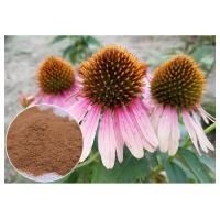 Echinacea pururea Antifungal Plant Extracts Polyphenol Powder Form Improving Immune System Manufactures