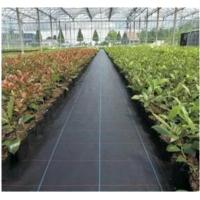 Black Color Ground Cover Landscape Fabric  PP Weed Control Mat Manufactures