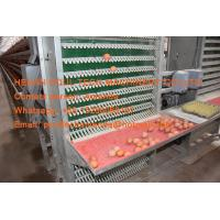 Silver White Hot Galvanized Steel A Frame Battery Layer Chicken Cage with 90-200 birds for Poultry Farm