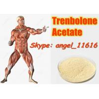 10161-34-9 Tren Acetate Trenbolone Powder For Fitness / Muscle Building Steroids Manufactures