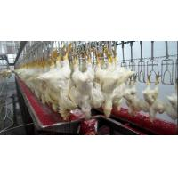 chicken slaughter equipment Manufactures