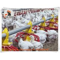 Chicken Farming Steel Automatic Broiler Chicken Floor Raising System & Deep Litter System Used in Broiler Farm Manufactures