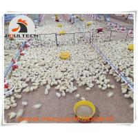 Poultry Farming Automatic Broiler Ground Rearing System & Broiler Deep Litter System in Chicken House Manufactures