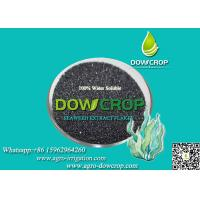 SEAWEED EXTRACT FLAKES FERTILIZER Manufactures