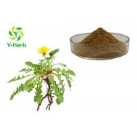 China Flavonoids 5% Herbal Extract Powder Taraxacum Officinale Dandelion Extract Powder on sale