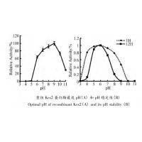 Buy cheap Yeast Kex2 Protease Endoproteolytic Processing Of Recombinant Proalbumin Variants from wholesalers