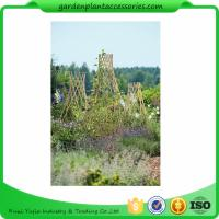 Straight Garden Bamboo Stakes For Thick Bamboo Fencing 40 X 150cm Manufactures