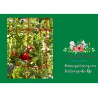 Powder Coated Steel Tomato Plant Stakes / Support For Tomato Plants Manufactures