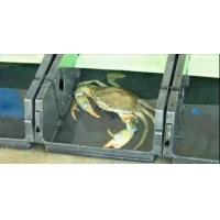 China Apartment crab, crab, crab culture box. Breeding container & box, combination of crab sing on sale