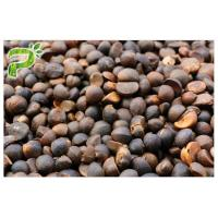 Natural Pesticides Raw Material Camellia Oleifera Abel Seed Extract Tea Saponins 60% & 80% Manufactures