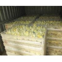 Quality Poultry & Broiler Chicken Farm White Color PE Material Broiler Chicken Carriage Cage & Plastic Transport Cage for Sale for sale