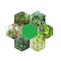 Green Tomato Plant Stakes / Tomato Plant Cage PE Coated Steel Manufactures